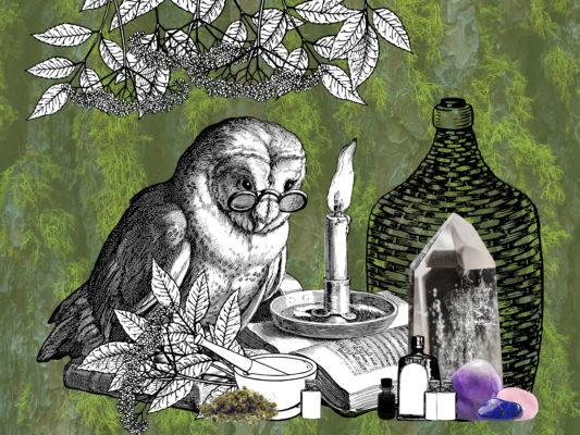Illustration d'une chouette avec des lunettes entourée de livres, de flacons, de oierres semie précieuses et de plantes.